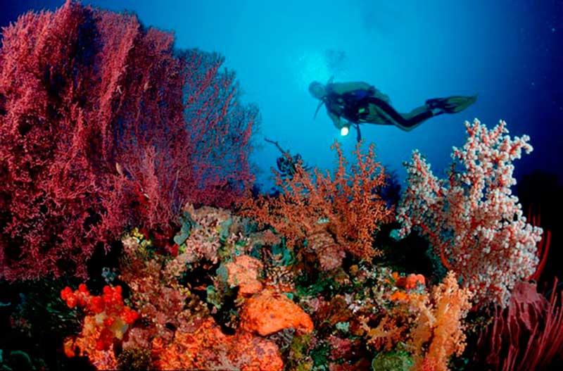 alor_diving